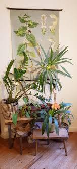 meine pflanzenecke im berliner zimmer pflanzenliebe