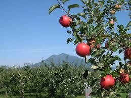 Hirosaki Apple Park aptinet Aomori Sightseeing Guide