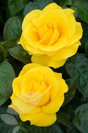 All About Yellow Flowers For Your Garden & Put A Smile Your Face