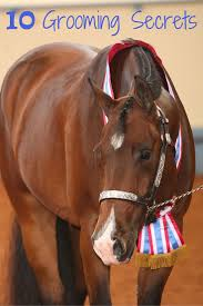 Horse Hair Shedding Blade by Best 25 Horse Grooming Ideas On Pinterest Horse Care Horse