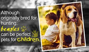 Non Shedding Dog Breeds Kid Friendly by A List Of Dog Breeds That Are Good With Kids Know Who U0027s The Best