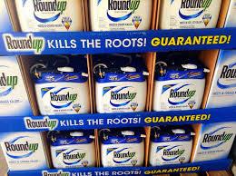 Beware Roundup Weed Killer