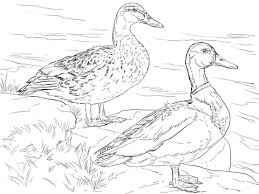 Click To See Printable Version Of Male And Female Mallard Ducks Coloring Page