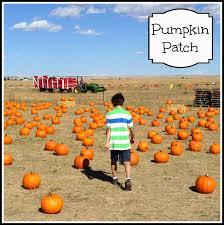 Colorado Springs Pumpkin Patch 2017 by The Diary Of A Nouveau Soccer Mom Wishing Star Farm Colorado