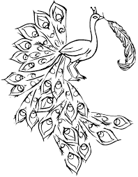 Peacock Coloring Pages For Kids