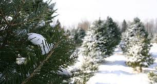 Christmas Tree Farm Lincoln Nebraska by Consider Buying A Local Tree This Christmas Morning Ag Clips