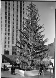 Christmas Tree Flocking Spray Uk by History Of The Rockefeller Center Christmas Tree Daily Mail Online