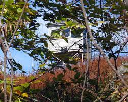 Huckleberry Railroad Halloween by Beech Trees New Hampshire Garden Solutions