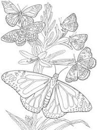 Butterfly Free Printable Adult Coloring Pages Flower