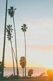 Photography Winter Landscape California Beach Palm Trees Sunset Vertical