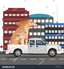 Dog Truck Large Dog Getting Ride Stock Illustration 207749167 ... Dog Truck Stock Photos Royalty Free Images Takes Semitruck For Joyride Crashes Into Tree And Parked Car Houston Food Foodie Good Hot Crate For Pickup How To Transport Dogs Safely In Quad Eastern Plant Hire Funloving Monster Truck Dog By Destroyer77 On Deviantart Stolen Reunited With Owner Days After It Was Taken The Back Of A Pickup Australia Photo 472518 Filetip Quad Trailerjpg Wikimedia Commons Home