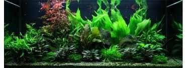 lots de plantes d aquarium pour débutant paysage aquatique n 48