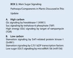 Transitioning to the Next Phase The Role of Sugar Signaling