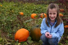 Southern Ohio Pumpkin Patches by Home
