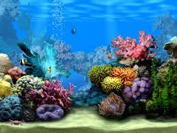 Free Ideas: Beautiful Inspiration Aquarium Aquascaping Designs ... Home Accsories Astonishing Aquascape Designs With Aquarium Minimalist Aquascaping Archive Page 4 Reef Central Online Aquatic Eden Blog Any Aquascape Ideas For My New 55g 2reef Saltwater And A Moss Experiment Design Timelapse Youtube Gallery Tropical Fish And Appartment Marine Ideas Luxury 31 Upgraded 10g To A 20g Last Night Aquariums Best 25 On Pinterest Cuisine Top About Gallon Tank On Goldfish 160 Best Fish Tank Images Tanks Fishing