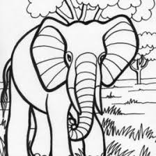 Adult Printable Elephant Coloring Pages For Adults Tone