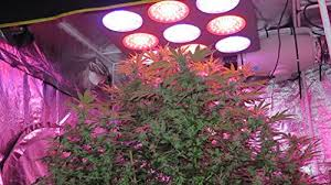 Cree Release Red led grow lighting