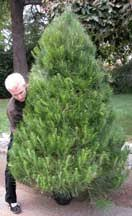 Krinner Christmas Tree Genie Xxl Deluxe by How To Make Your Christmas Tree Last