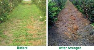 Weed Killer Spray Avenger Before And After Organic
