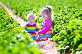 Barnesville Pumpkin Festival Times by 5 Top Farms For Strawberry Picking