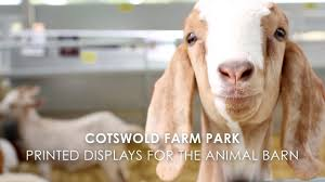 Cotswold Farm Park - The Animal Barn - YouTube Our Little Girls Nursery Atlanta Georgia Wedding Photographer I Love How Strange And Alien Barn Owls Look They Like Life In Abu Dhabi Sunset The Park Jobis Animal Barn Android Apps On Google Play Green Dragon Ecofarm Twitter Adorable Come Visit Them Merry Christmas From The Network Youtube Fun Day At Mountsberg Cservation Area Raptors Sheep Maple Cotswold Farm Park Facilities Information Animals Outside Stock Vector Image Of Duck 72935686 Have You Seen Reindeer Sky High Artist Dan Colens Painterly Landscape