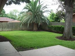 Backyard Palm Trees Front Yard Landscaping With Palm Trees Faba Amys Office Photo Page Hgtv Design Ideas Backyard Designs Wood Above Concrete Wall And Outdoor Garden Exciting Tropical Pools Small Green Grasses Maintenance Backyards Cozy Plant Of The Week Florida Cstruction Landscape Palm Trees In Landscape Bing Images Horticulturejardinage Tree Types And Pictures From Of Houston Planting Sylvester Date Our Red Ostelinda Southern California History Species Guide Install