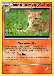 orange cat names pokémon orange tabby cat characteristics my card