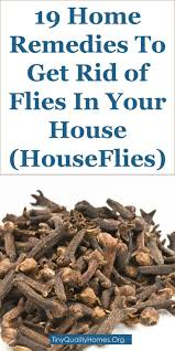 25+ Unique Flies Outside Ideas On Pinterest | Sliding Doors ... How To Get Rid Of Flies In Backyard Outdoor Goods Diy Using Pine Sol To Of House Youtube 25 Unique What Kills Fruit Flies Ideas On Pinterest Pest Keep Away Repellent Rid Rotline Do I Get Solana Center For 3 Ways Around Your Dogs Water And Food Bowls Fruit Kill Do You Chicken Coop For Happier Hens Coops Those Pesky Flies From Pnic Areas Easy Home Remedy Coping With The Fall The New York Times Outdoors Step By