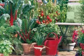 un balcon potager conseils plantes du potager et fruitiers pour