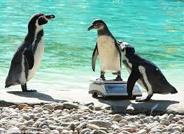 penguin is stolen from german zoo and decapitated daily mail online