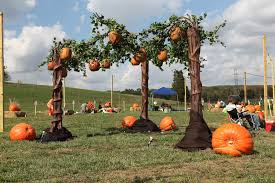 Southern Ohio Pumpkin Patches by 112 Best Images About Halloweenies On Pinterest Halloween