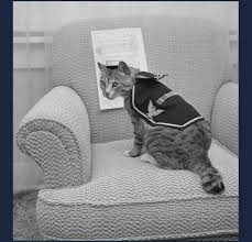service cats cats in the sea services u s naval institute