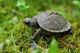 5 biggest mistakes pet turtle owners make turtleholic