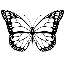 Choose A Butterfly Pattern For Tracing You Can Hand Draw One Or Print