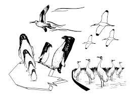 Coloring Page Sea Birds