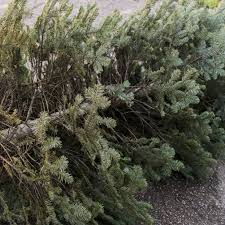 How To Get Rid Of Your Christmas Tree In Austin