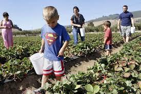 Santa Cruz County Christmas Tree Farms by Tour Farms Harvest Food In Santa Cruz County Sfgate