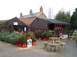 Best Christmas Tree Type Uk by Home New Farm Christmas Tree U0027s