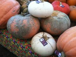 Types Of Pumpkins And Squash by Scenes Of The Veggie Patch The Veggie Patch
