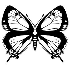 Butterfly Line Art Clipartsco