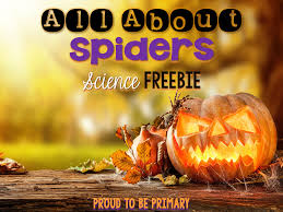 Pumpkin Stages Of Growth Worksheet by Learning About Spiders