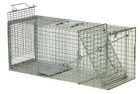 live cat trap cat trap cat traps cat cage cat cages cat trapping cat