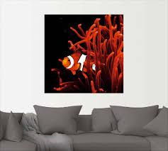 artland wandbild clown fisch mit koralle wassertiere 1 st in vielen größen produktarten alubild outdoorbild für den außenbereich