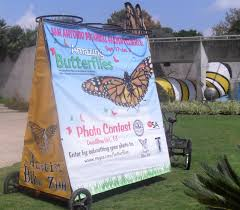 13th Floor San Antonio Tx by Amazing Butterflies At The San Antonio Botanical Garden Urban