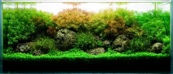 Aquarium Design Group A Planted Aquarium with Featherfins