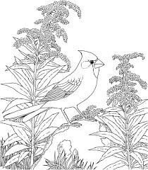 State Bird Coloring Page