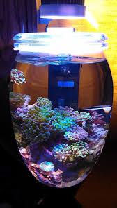 Decorator Crabs Reef Safe by 158 Best Aquariums Images On Pinterest Marine Aquarium