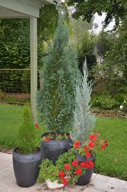 Potted Christmas Tree by Sustainable And Environmentally Friendly Ideas For Entertaining