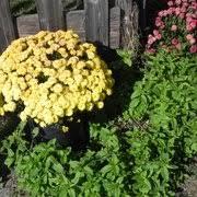 Conners Pumpkin Patch Jacksonville Fl by Conner U0027s A Maize Ing Acres 56 Photos U0026 11 Reviews Venues