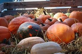 Real Pumpkin Patch Dfw by Gruene Pumpkin Patch New Braunfels Texas Gruene Texas